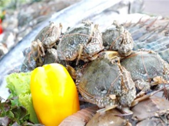 http://img4info.modetour.com//1690312/PUSANTHAI/MINJUNG/seafooood.jpg